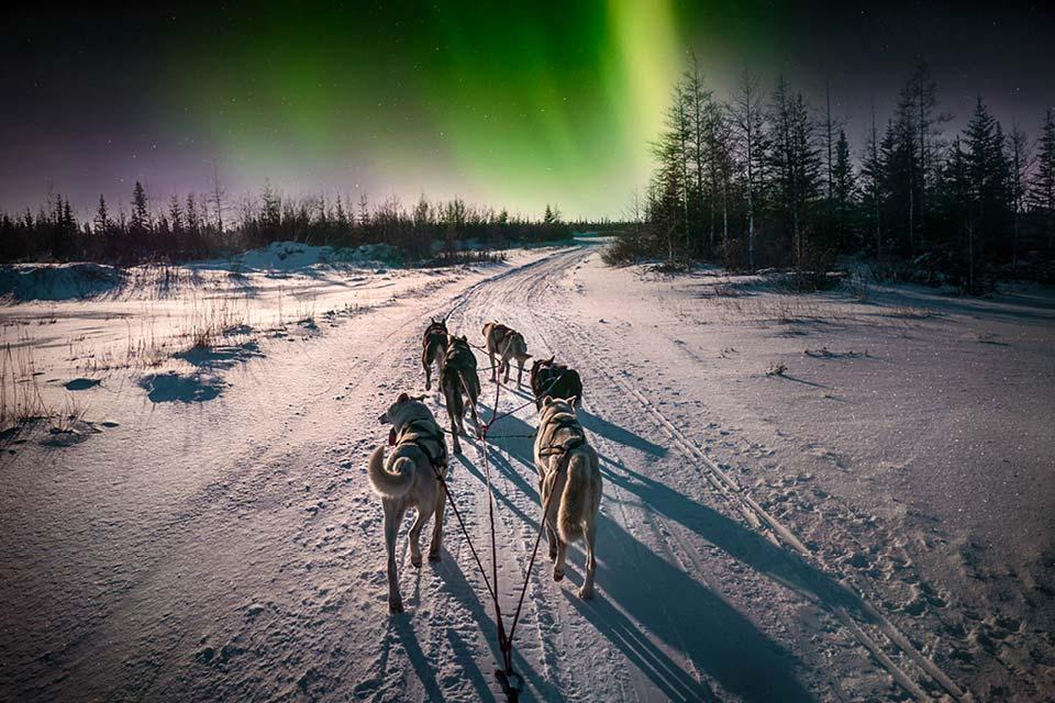 Mit dem Hundeschlitten zu den Nordlichtern