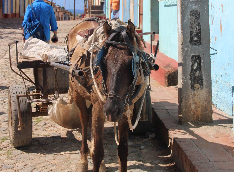 Auf Cuba werden Waren nicht nur mit dem Auto transportiert. Auch Eselskarren werden noch genutzt.