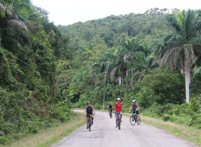 Radtour durch den Regenwald mit hohen Palmen und Farnen