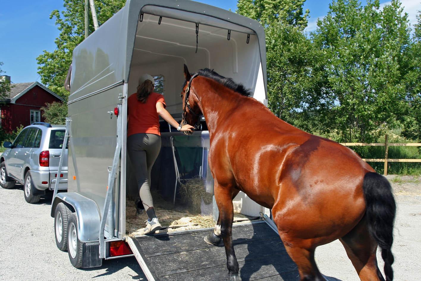 Gewerblicher Tiertransport unterliegt in Deutschland der Tierschutztransportverordnung.