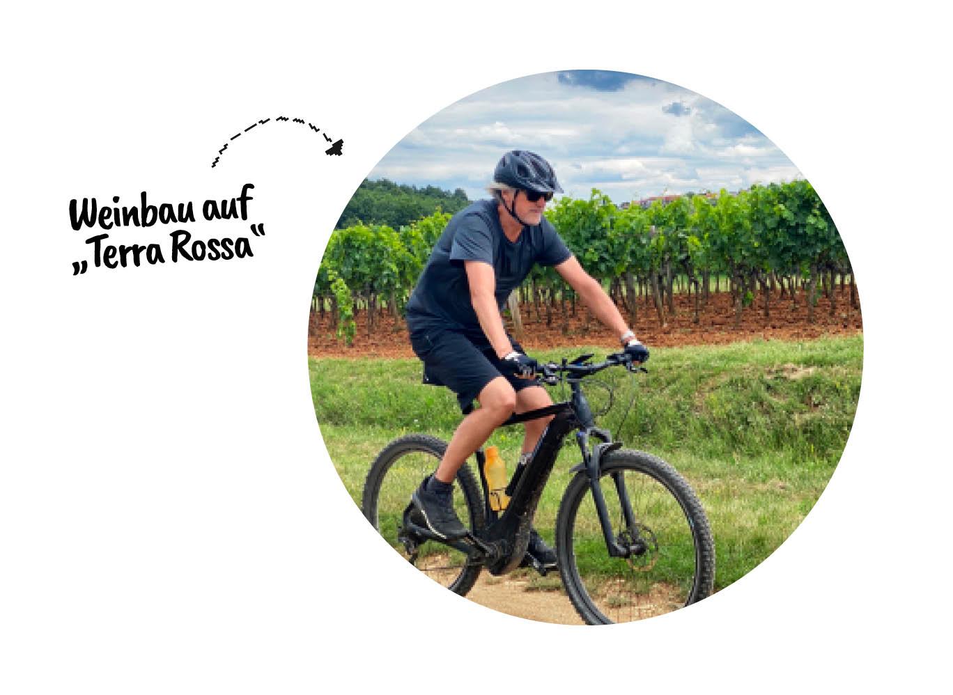 Weinbau auf Terra Rossa